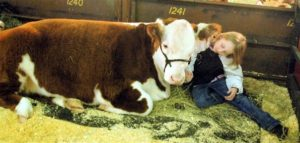 Cow Stock Show Denver
