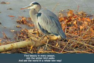 Image courtesy of Hudson Gardens website.