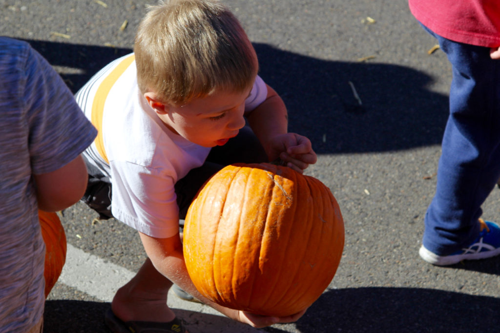 Stepping Stone fall fest pumpkins