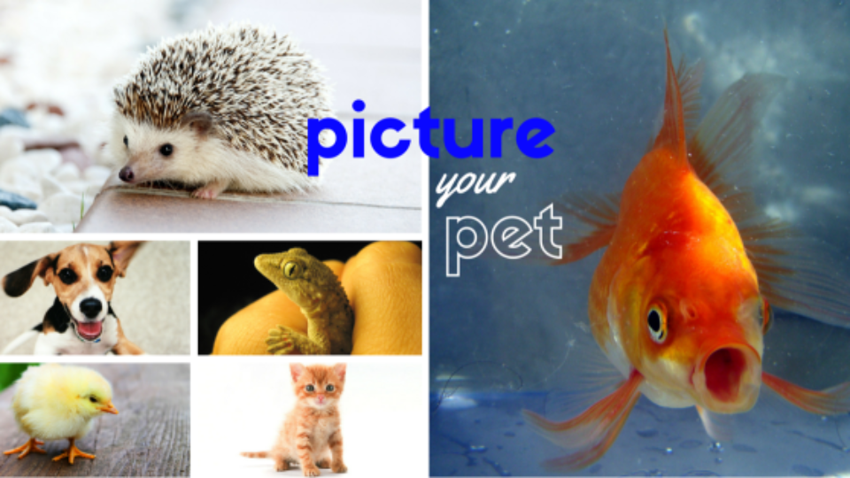 Picture Your Pet | Official Rules