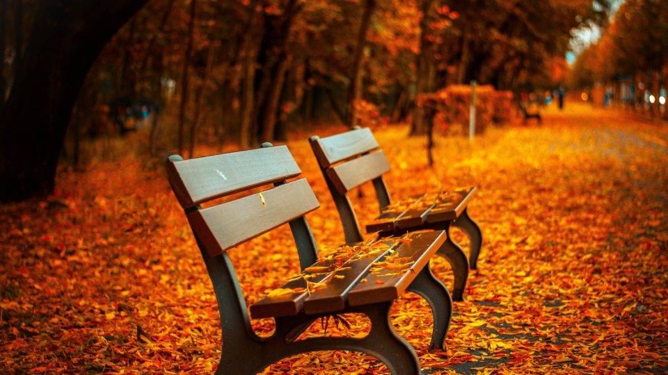 Fall into a Splendor of Color