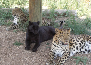 Wild Animal Sanctuary Keenesburg Colorado