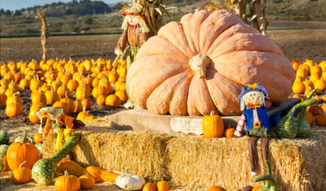 Pumpkin patch Stepping Stone community events
