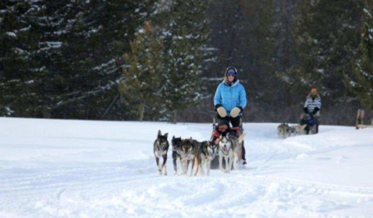 dogsledding in Colorado