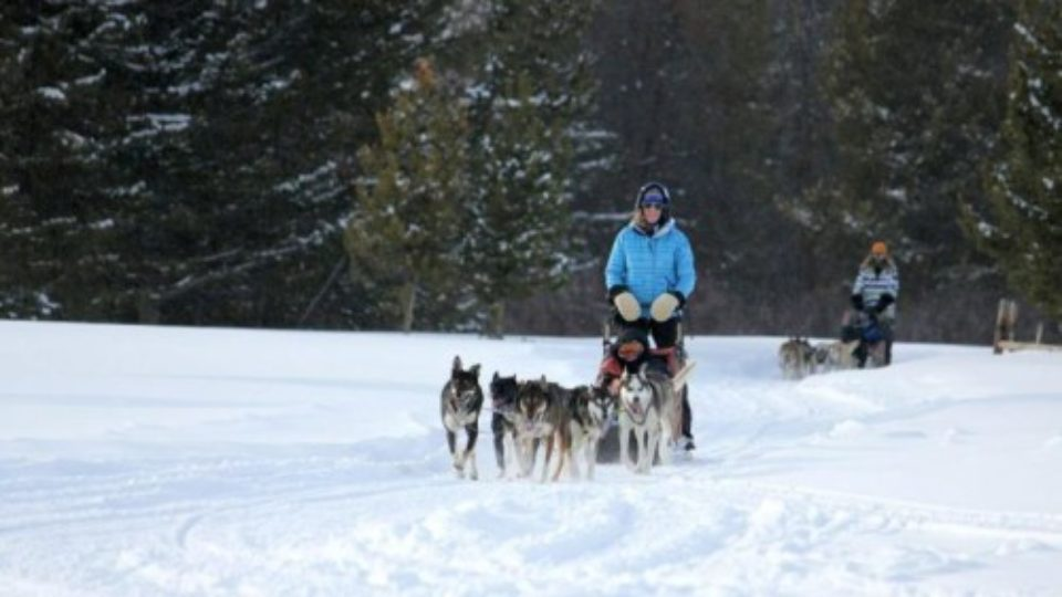 dogsledding in Colorado