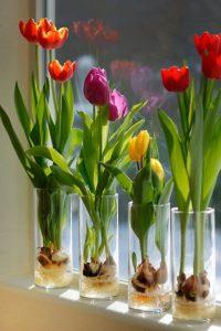 tulips in container garden