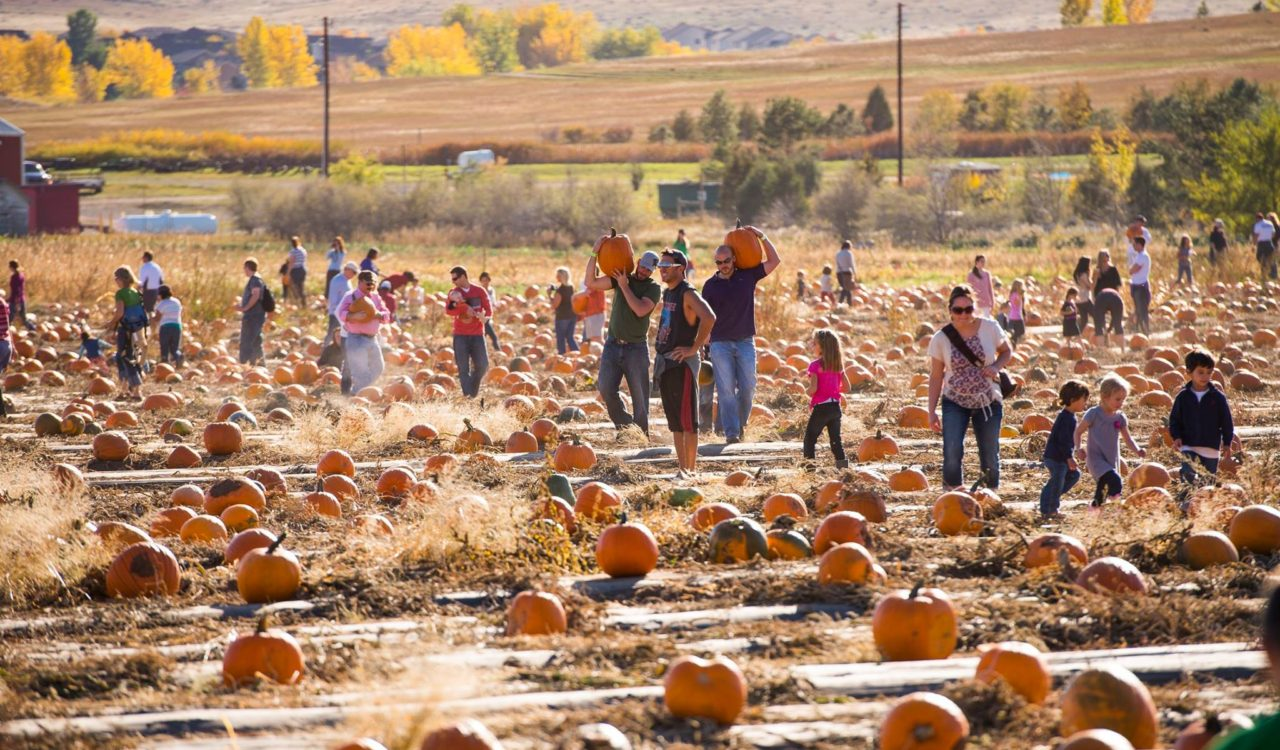 chatfield farms pumpkins