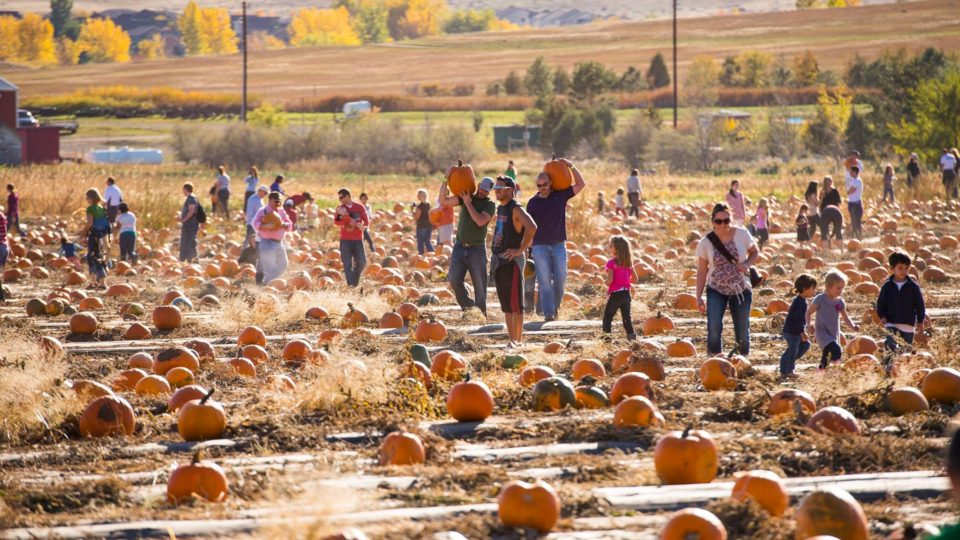 chatfield farms pumpkins