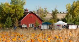 pumpkin festival chatfield farms
