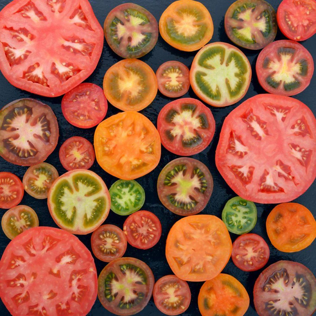 tomato botanical