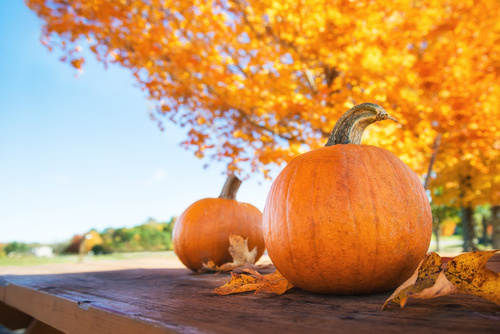 Pumpkins against autumn trees and blue sky at the farm. Copy spa